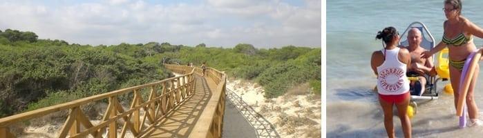 paseo de madera de la playa de muro en alcudia