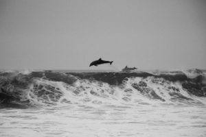 deportes acuaticos en invierno watersportsmallorca 300x200 - Home